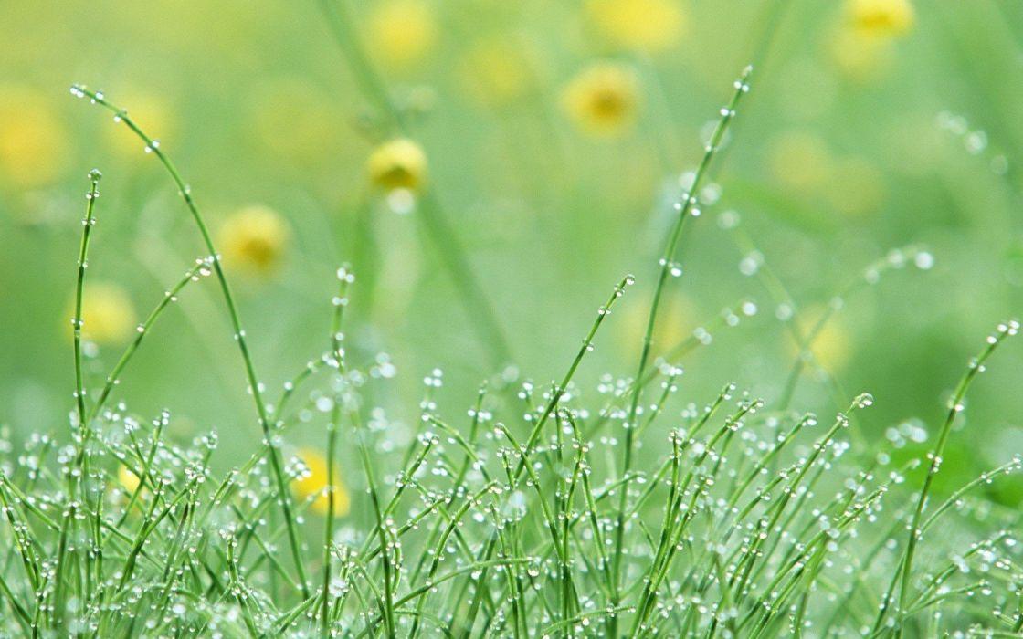 nature dew wallpaper