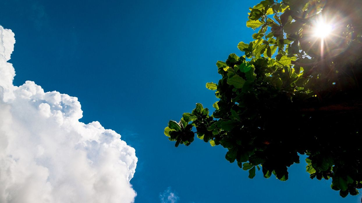 clouds trees skyscapes wallpaper