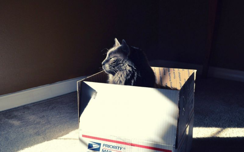 cats animals sunlight boxes wallpaper