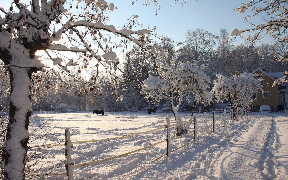 nature winter snow fences horses snow landscapes wallpaper
