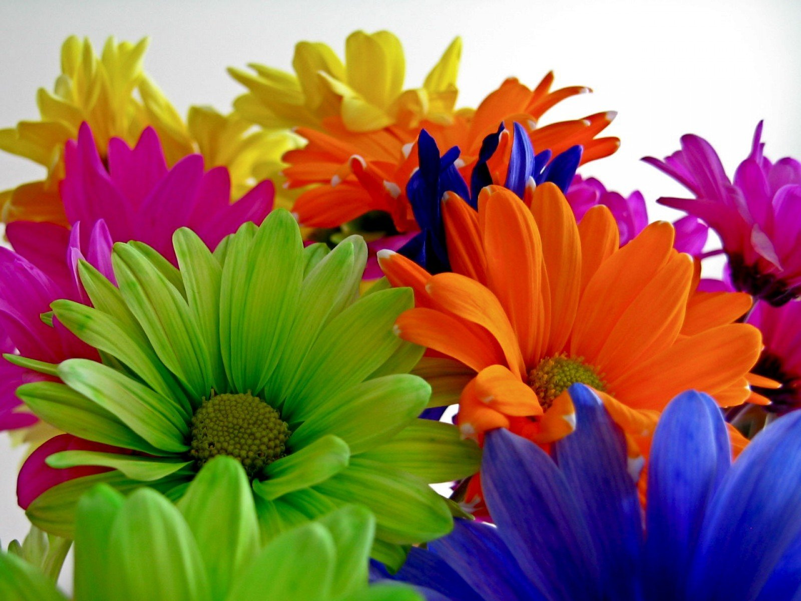 Multicolor flowers wallpaper 1600x1200 289931 for How to make multi colored flowers