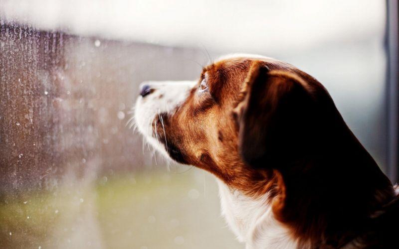 animals dogs window panes wallpaper