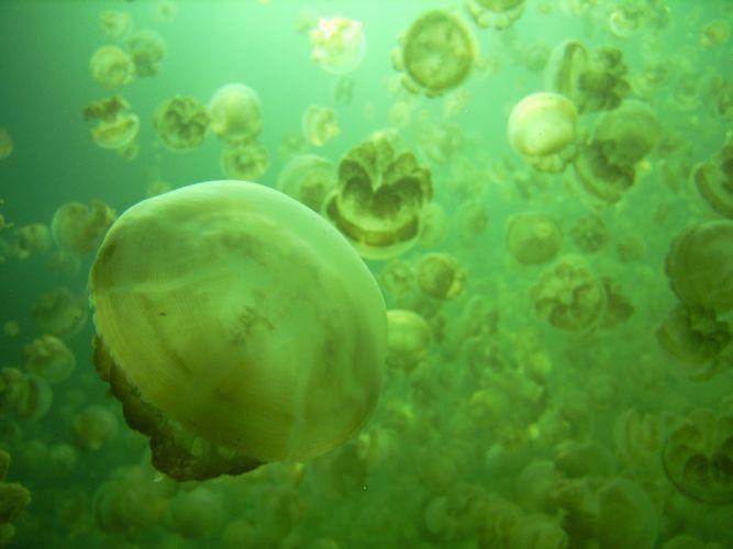 green nature jellyfish wallpaper