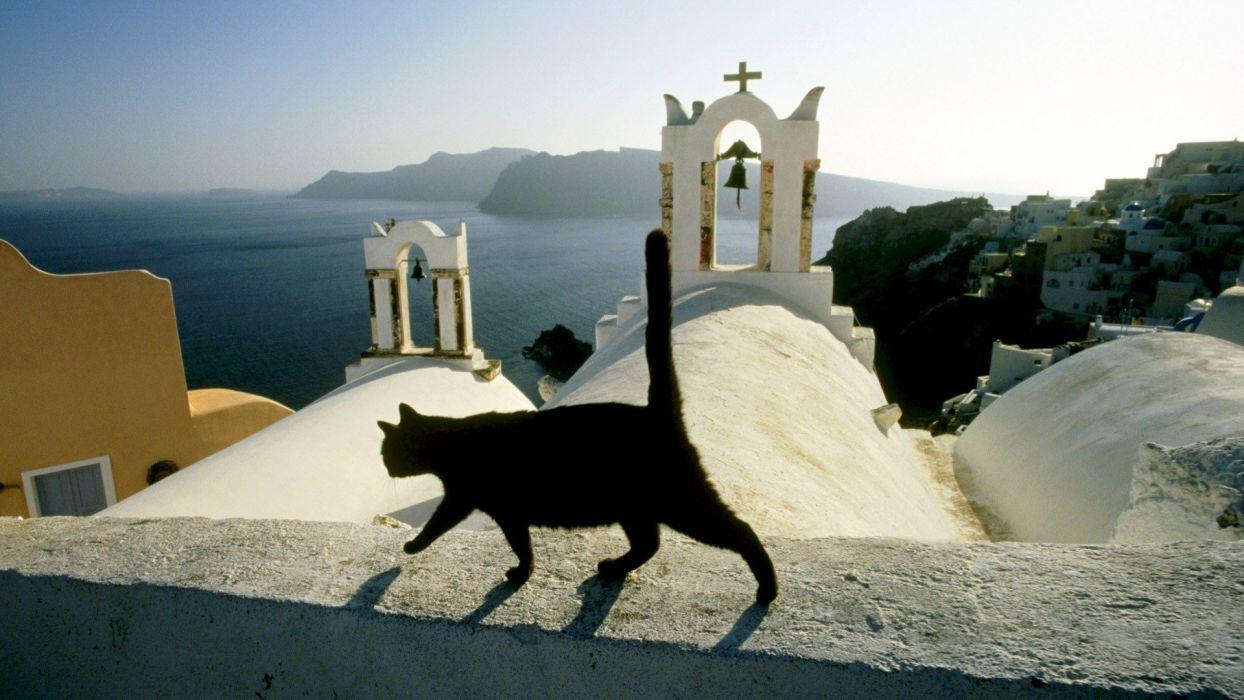 cats animals Santorini islands Greece wallpaper
