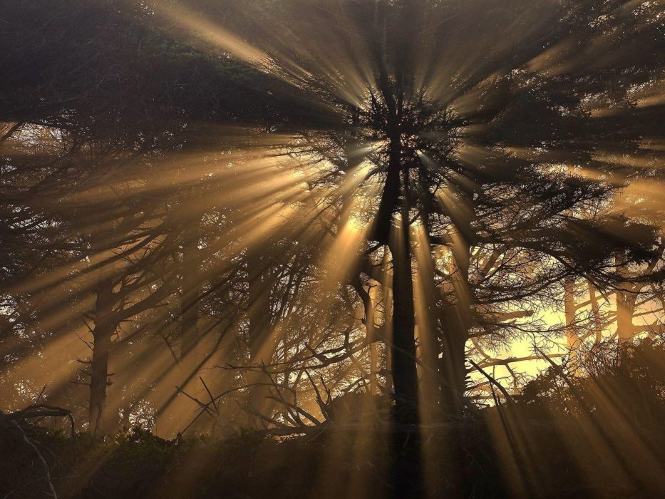 nature trees sunlight wallpaper