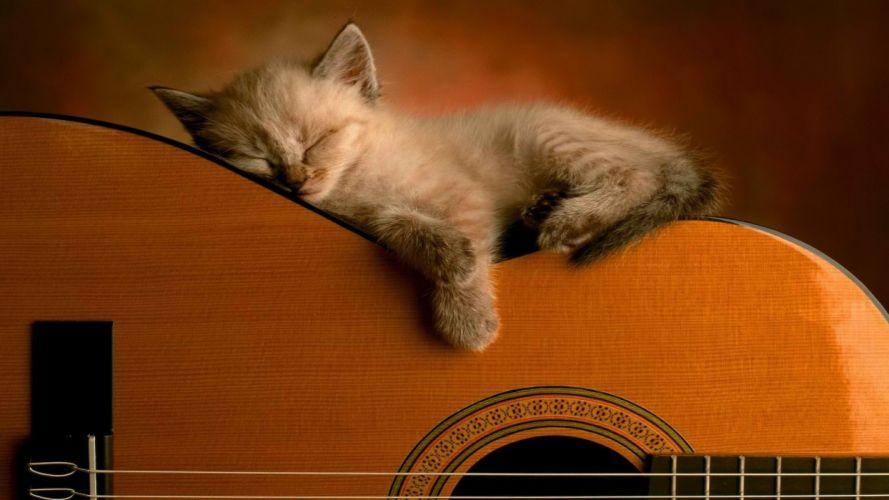 animals guitars sleeping kittens wallpaper