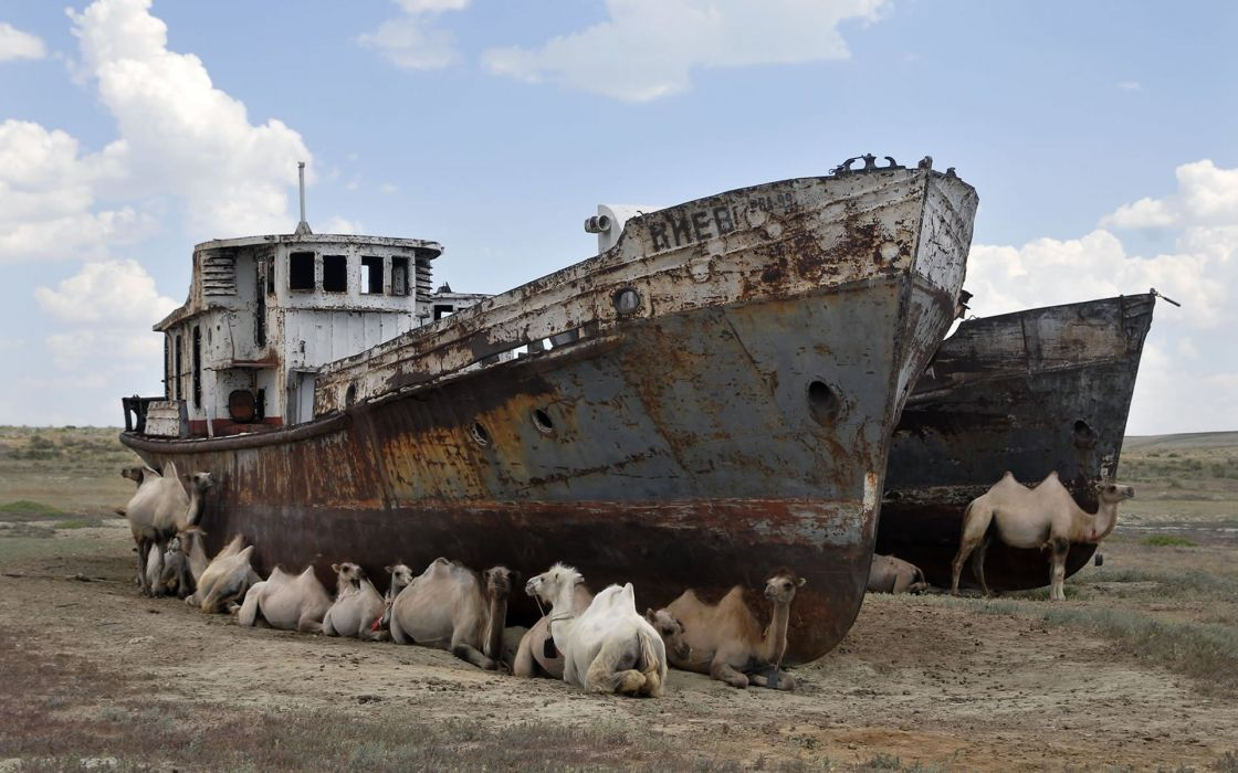 deserts ships camels shipwrecks wreckage wallpaper