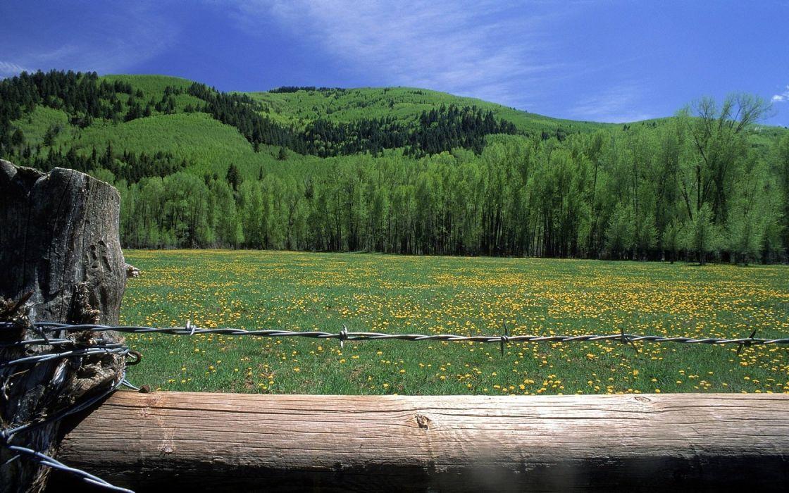 green landscapes fields wallpaper