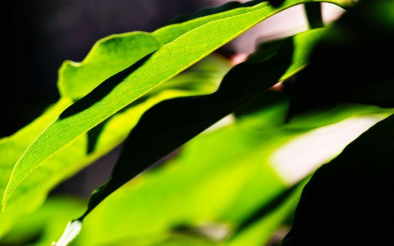 green nature leaves wallpaper