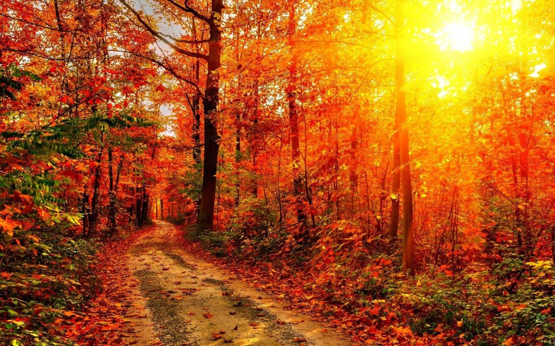 forests paths sunlight wallpaper