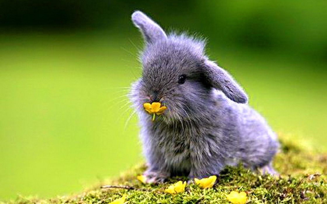 Bunnies Nature Animals Baby Animals Wallpaper 1920x1200