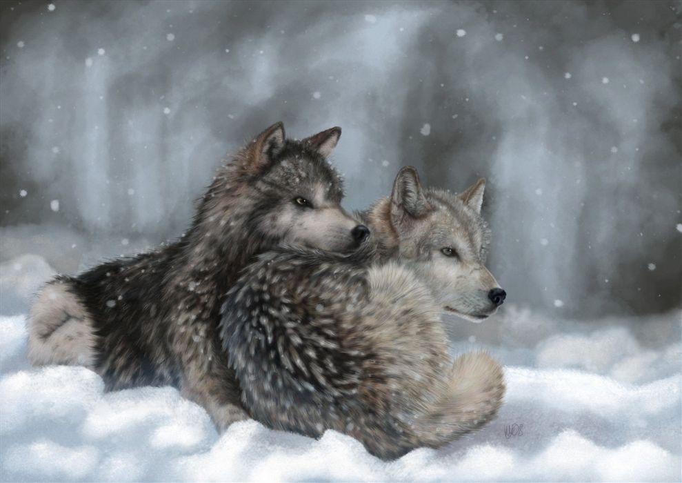 art lying wolves winter snow wolf wallpaper