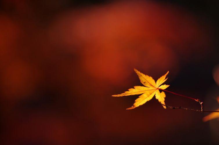 branch twig leaf autumn close-up bokeh wallpaper