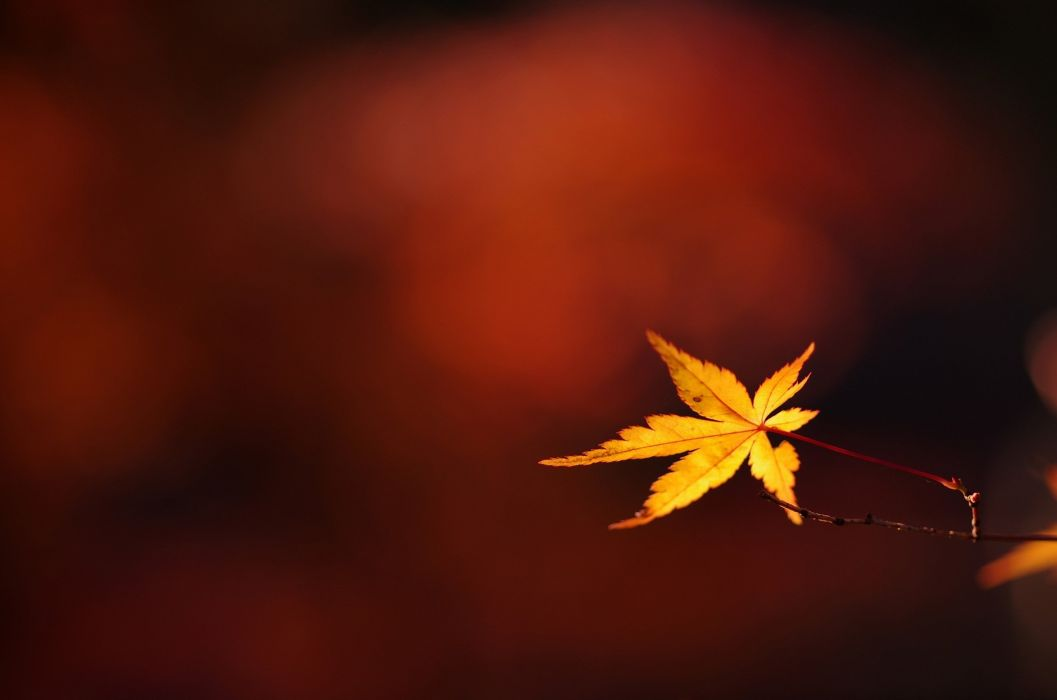 branch twig leaf autumn close-up bokeh wallpaper