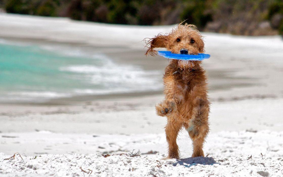 dog friend sea beach play wet wallpaper