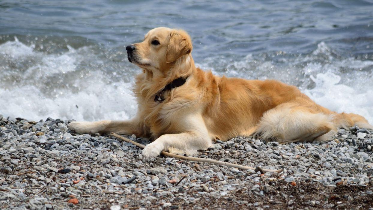 friend dog sea wallpaper