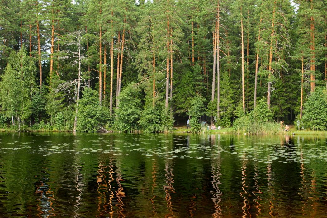 forest lake St_ Petersburg Russia reflection wallpaper