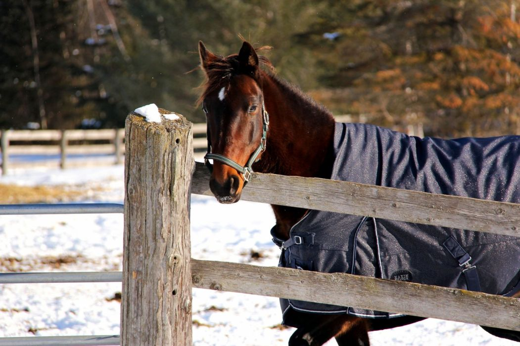 horse face corral fence blanket winter snow wallpaper