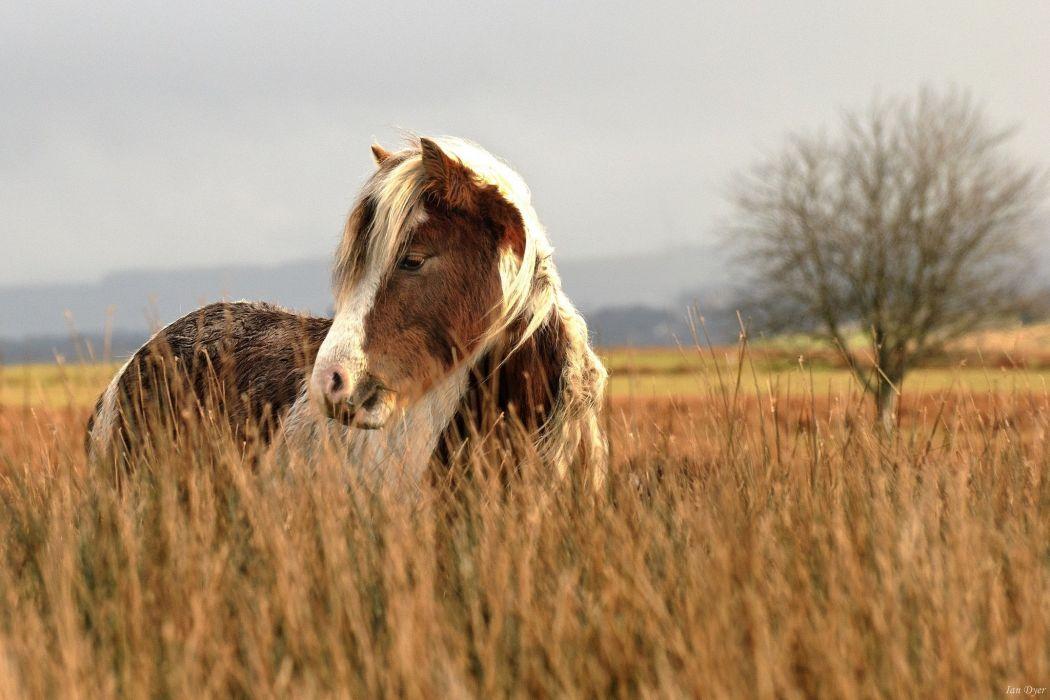 horse face grass pasture field autumn wallpaper