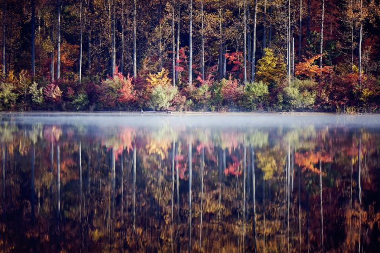 lake forest trees shrubs autumn reflection wallpaper