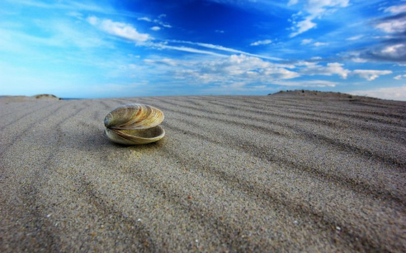 macro shell sand sky bokeh wallpaper