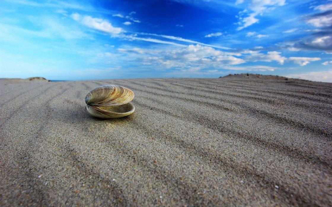 macro shell sand sky bokeh wallpaper