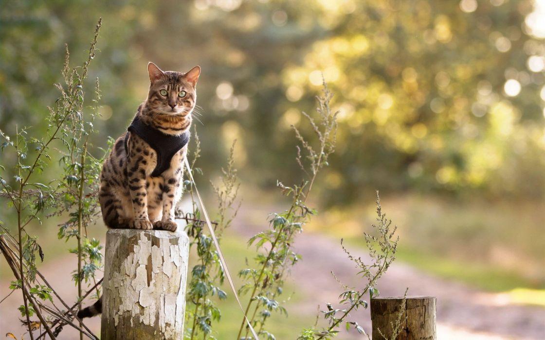 nature eyes cat wallpaper