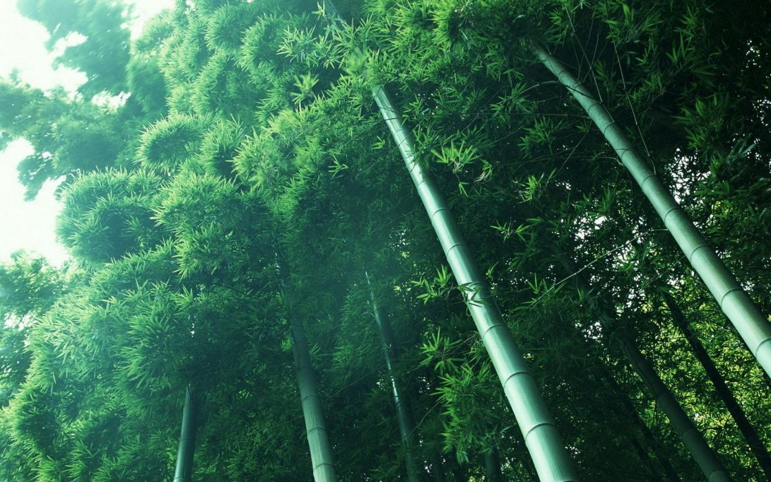 nature bamboo herbs forest wallpaper