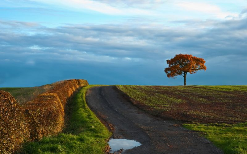road field tree landscape wallpaper