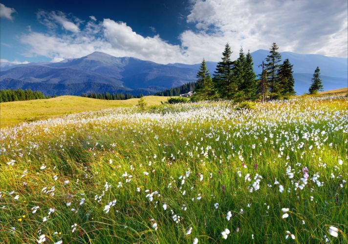 trees flowers mountains clouds wallpaper