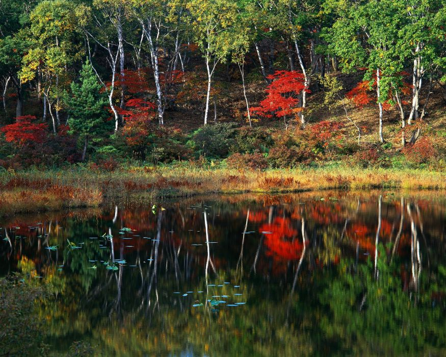 trees forest reflection lake autumn wallpaper