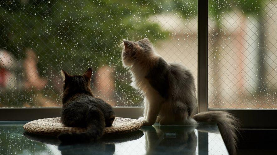 window cat house rain wallpaper