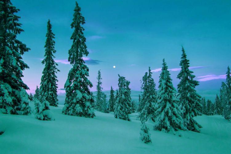 winter snow trees rasvet wallpaper