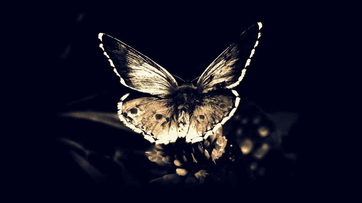 skulls death fly Gothic darkness moths butterfly wings butterflies wallpaper