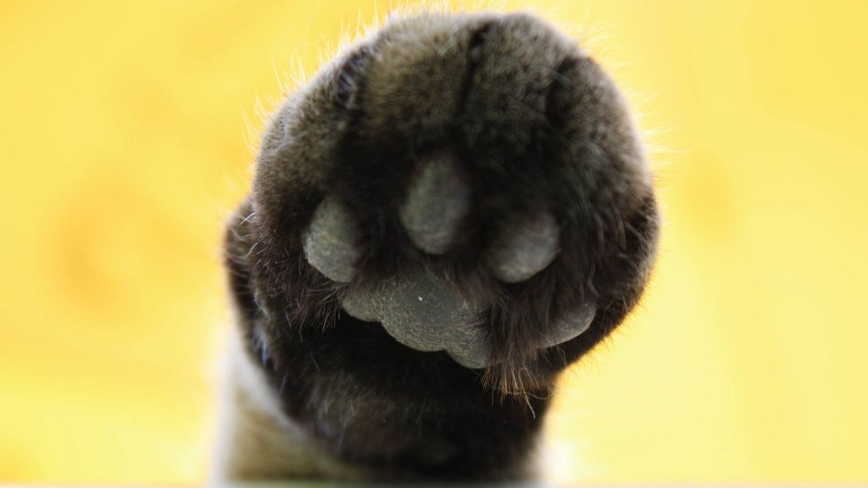 animals paws wallpaper