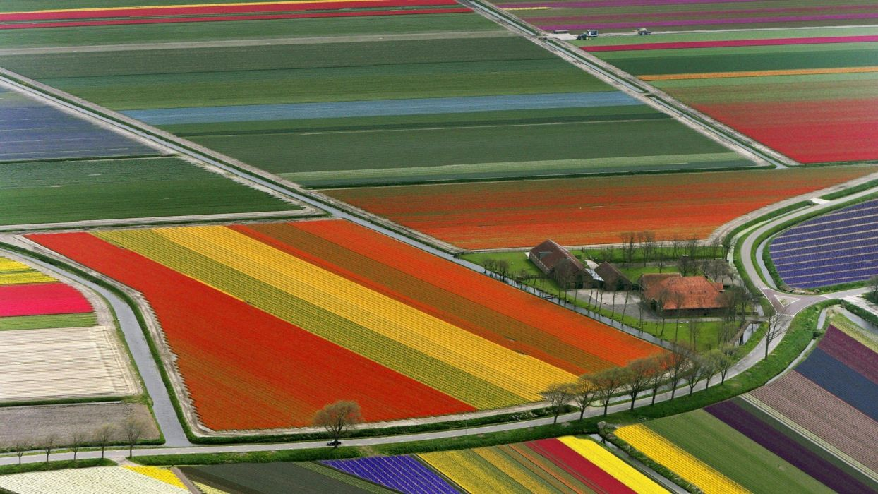 fields colored wallpaper
