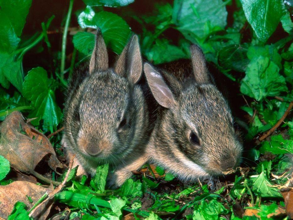 green nature grass rabbits baby animals Young rabbits wallpaper