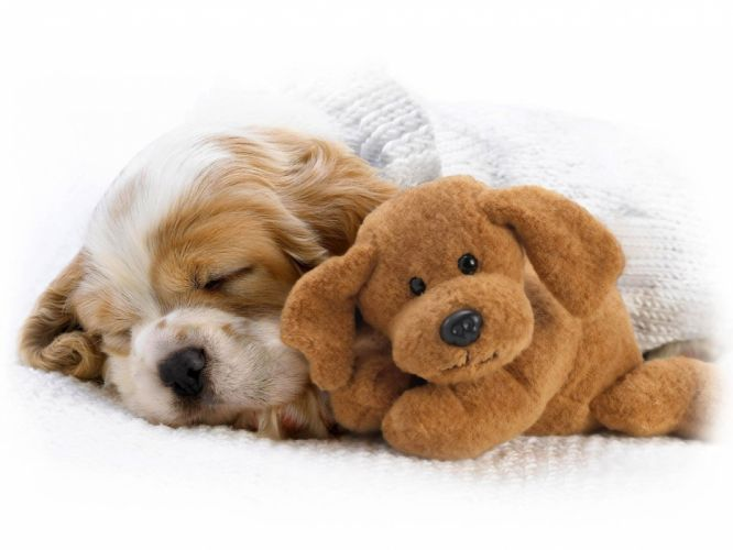 dogs stuffed animals sleeping wallpaper
