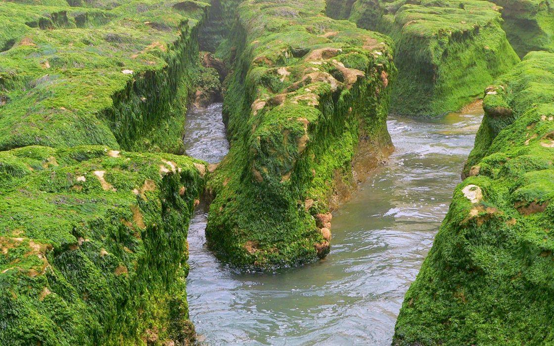 ocean landscapes seaweed wallpaper