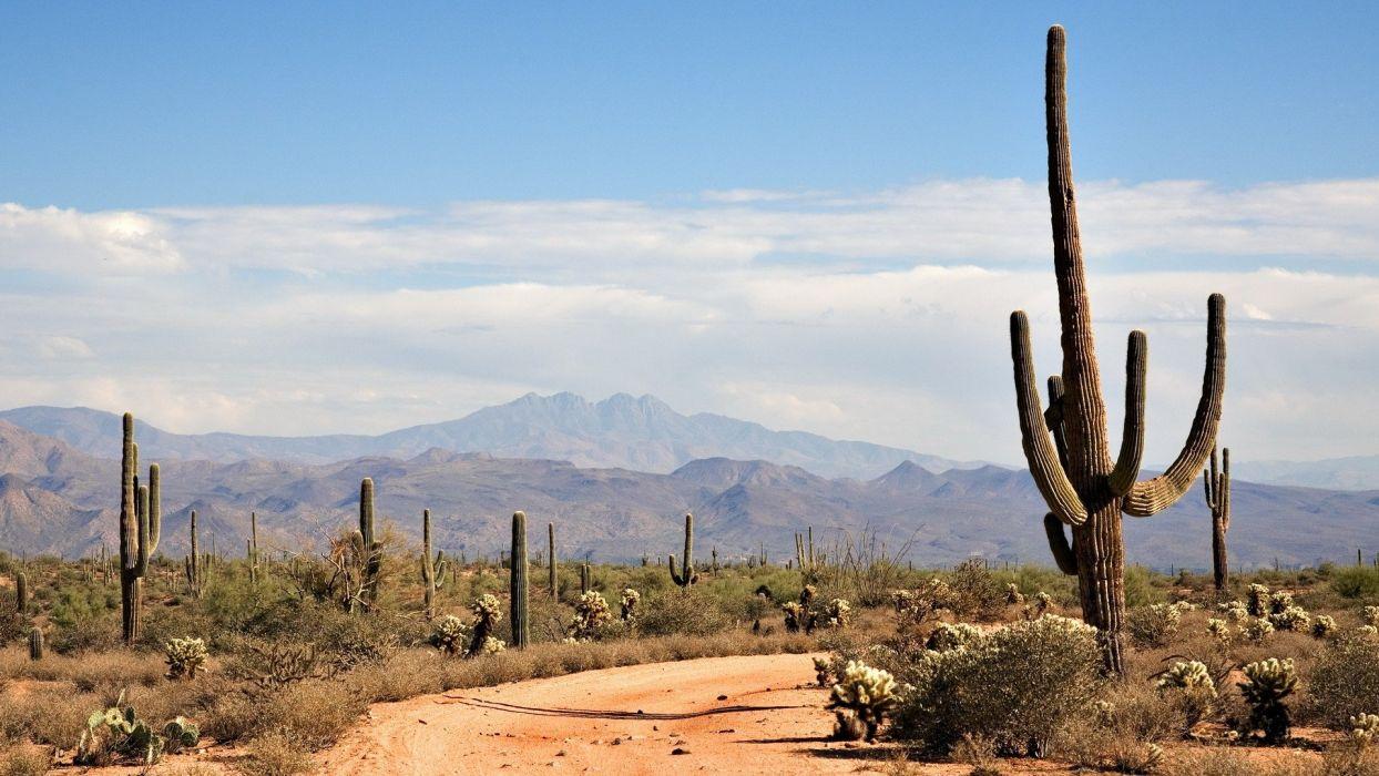 landscapes nature cactus land wallpaper