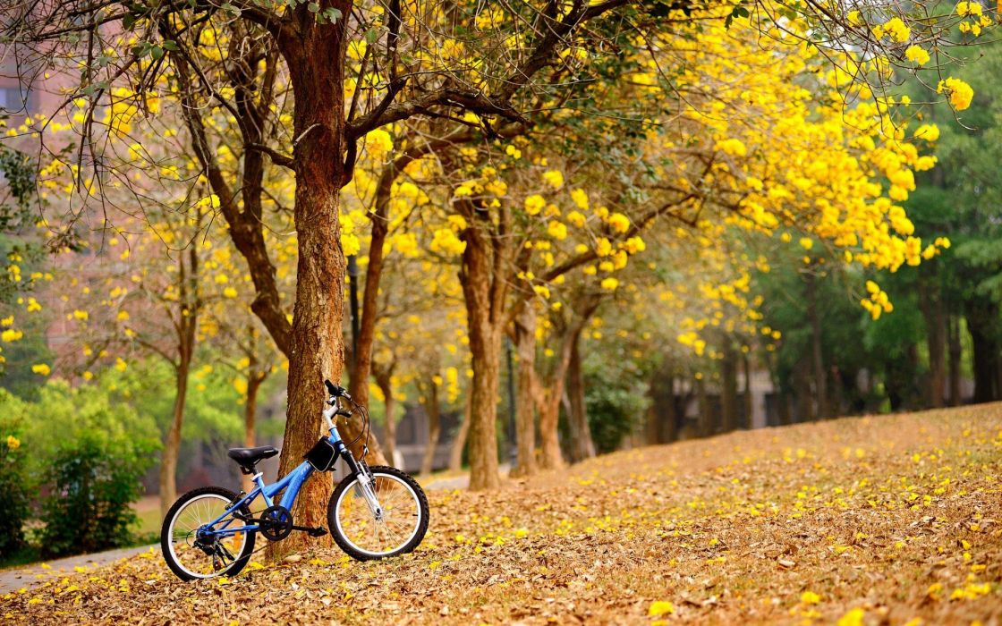 bicycles leaves wallpaper