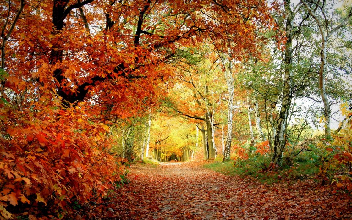 forests leaves paths fallen leaves wallpaper