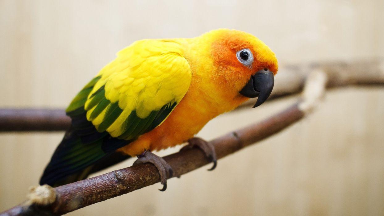 birds parrots branches wallpaper