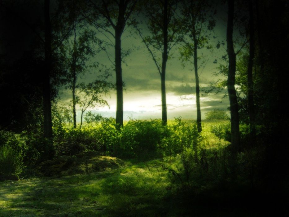 green nature trees forests mysterious  wallpaper