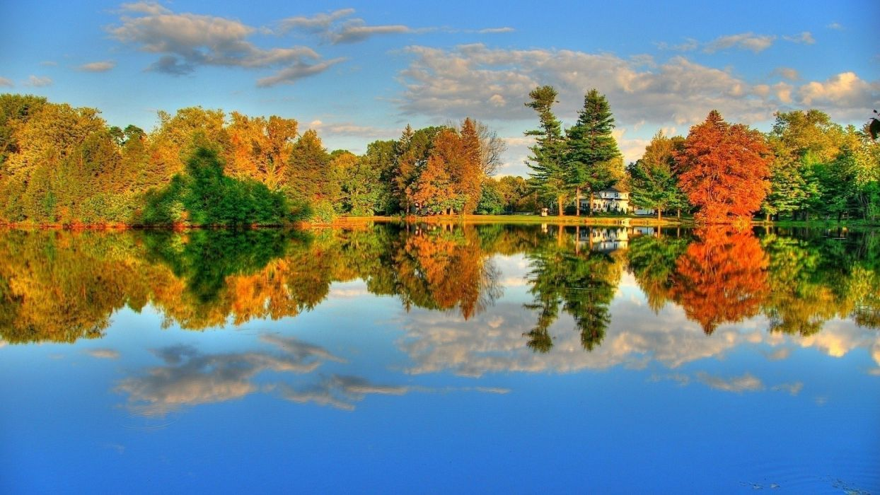 nature trees reflections wallpaper