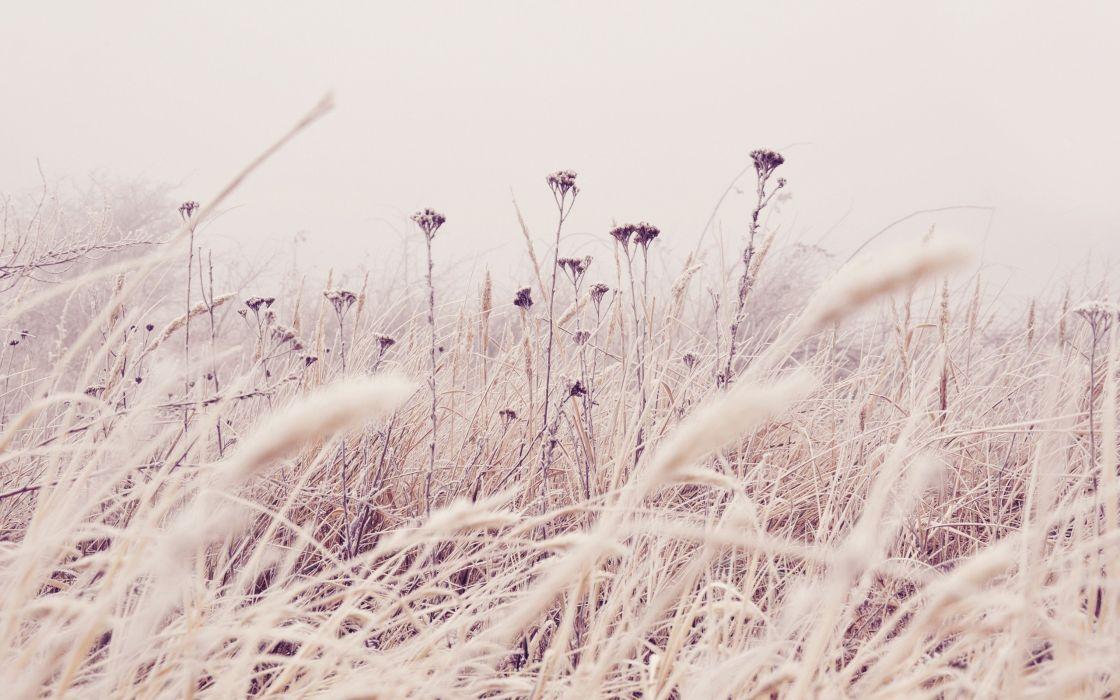 nature flowers plants frost wallpaper