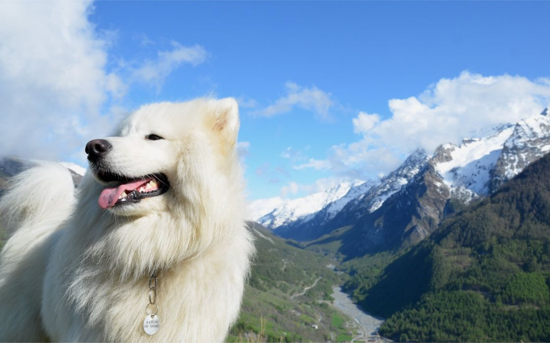 mountains clouds landscapes nature animals dogs Samoyede wallpaper