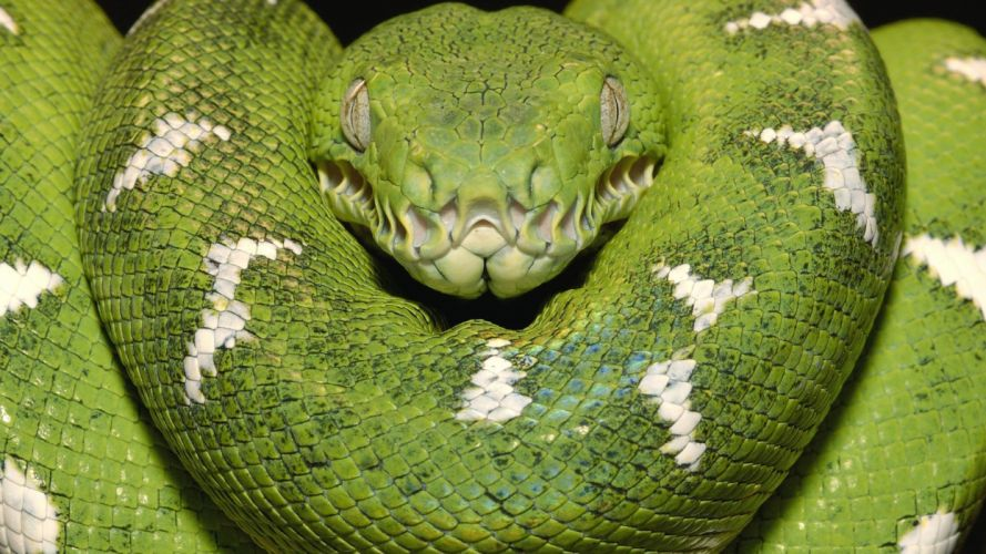 snakes boa amazon Emerald wallpaper