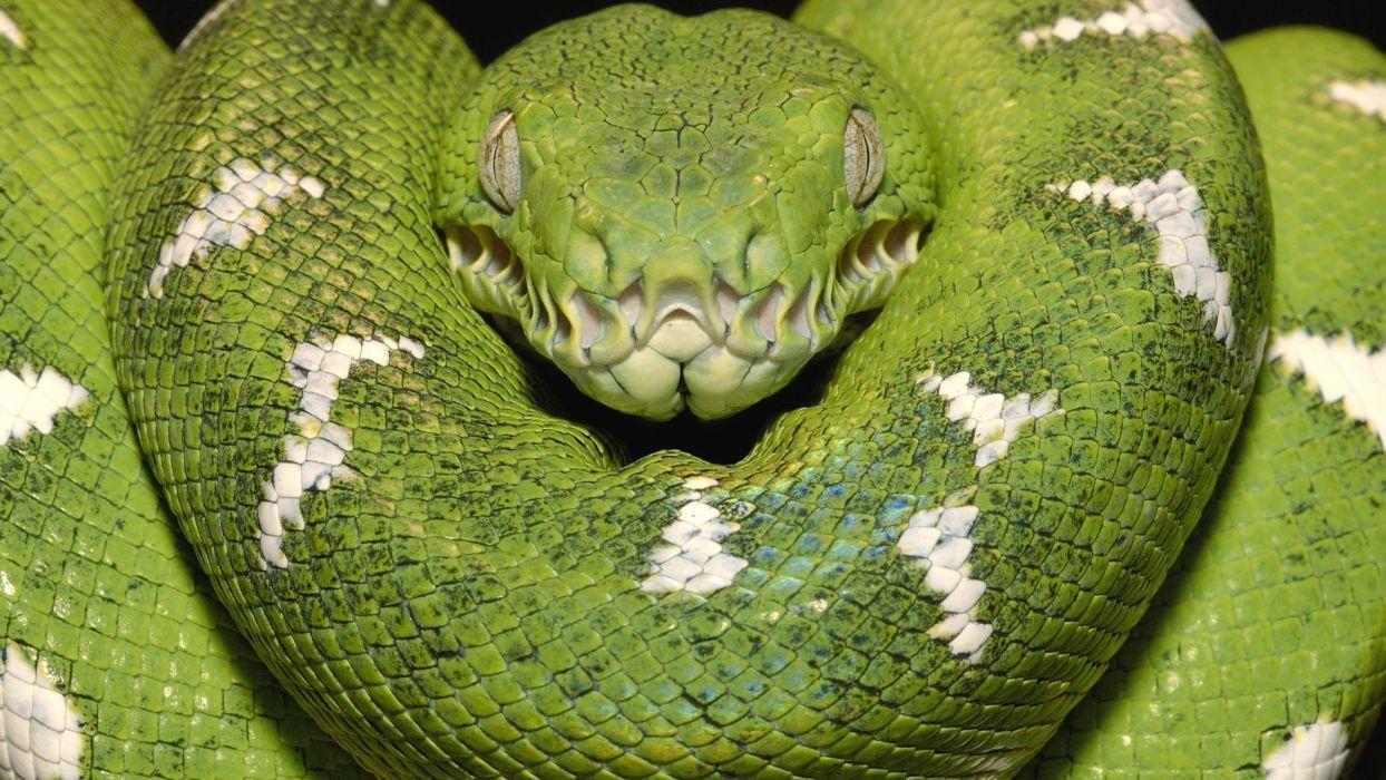 snakes boa amazon Emerald wallpaper