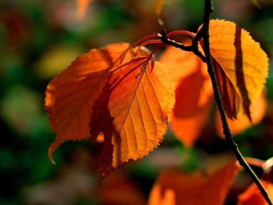 nature leaves bokeh wallpaper